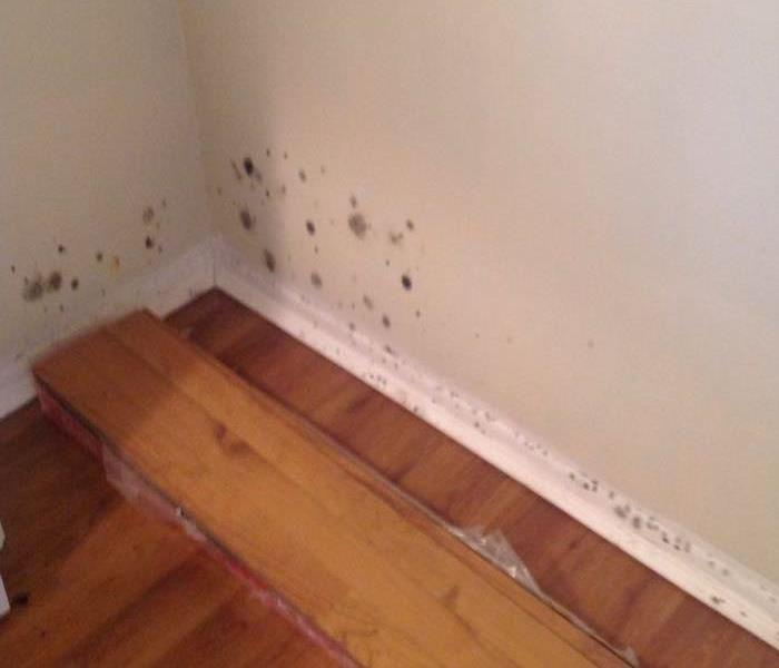 Minor mold removal in Highland Haven, TX. Before
