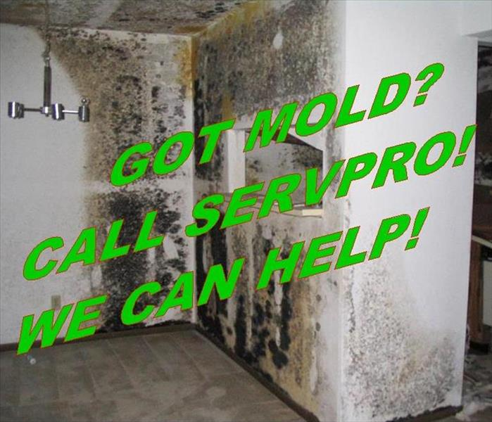 Mold Remediation Has mold made itself welcomed in your home?